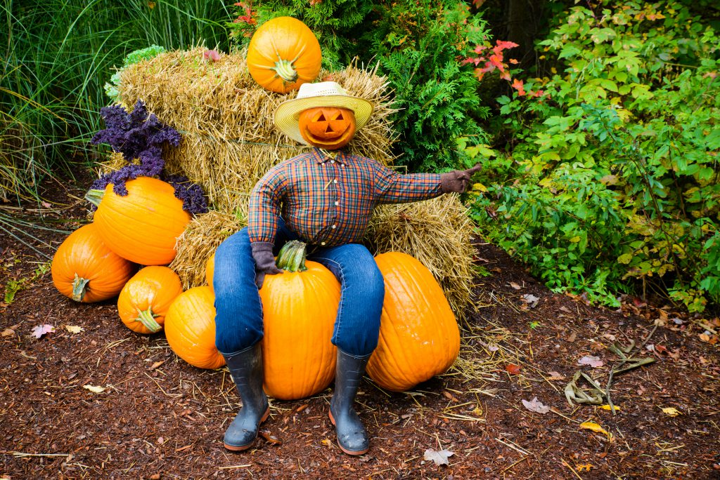 Family-Friendly Fall Events Happening in North Myrtle Beach